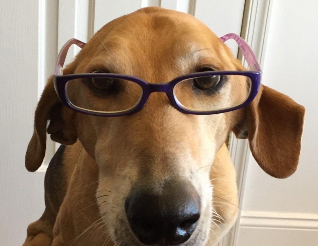 image of author's dog with reading glasses